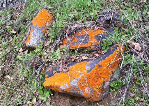Lichen on San Joaquin River Gorge Trail