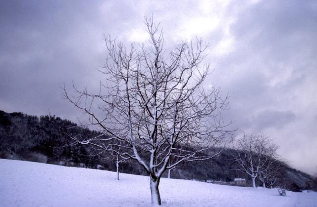 http://www.free-pictures-photos.com/tree/tree-35.jpg